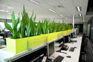 địa chỉ mua cây xanh văn phòng giá rẻ nhất Hà Nội