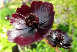 Loại hoa hiếm và đẹp nhất thế giới