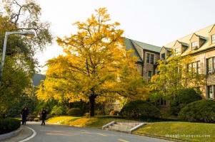 Trường đại học tốt nhất Hàn Quốc 2016