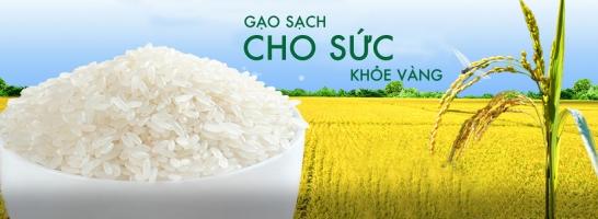 đại lý bán gạo giá rẻ và uy tín nhất ở TPHCM