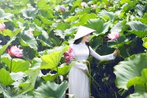 đầm sen đẹp nhất Việt Nam thích hợp để chụp ảnh