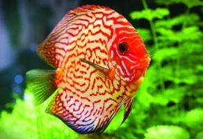 địa chỉ bán cá cảnh uy tín nhất tại TPHCM