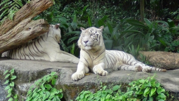 điểm đến thú vị nhất dành cho những người yêu động vật tại Việt Nam