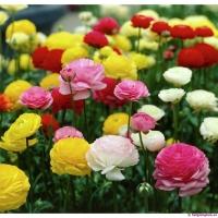 Địa chỉ bán hạt giống hoa chất lượng nhất miền Bắc