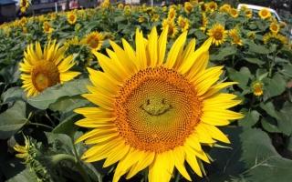 Địa chỉ bán hạt giống hoa uy tín nhất tại TPHCM