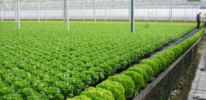địa chỉ bán rau hữu cơ uy tín nhất tại Hà Nội