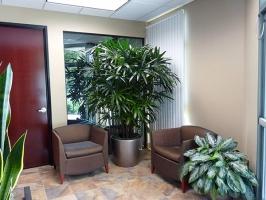 địa chỉ mua cây xanh văn phòng giá rẻ và đẹp nhất tại TPHCM