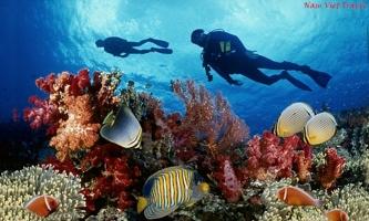 địa điểm trải nghiệm lặn biển tuyệt nhất ở Việt Nam