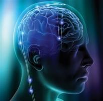 điều thú vị về bộ não có thể bạn chưa biết