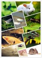 Loài động vật có tuổi thọ ngắn nhất hành tinh