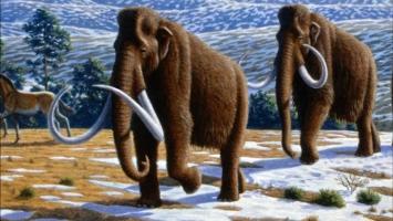 động vật tuyệt vời nhất đã bị tuyệt chủng có thể bạn muốn biết