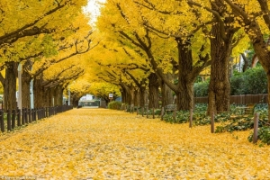 Đường cây đẹp nhất thế giới