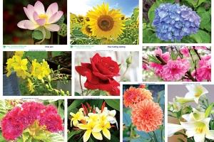 Loài hoa ngày Tết mang nhiều ý nghĩa may mắn nhất