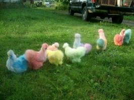 Giống gà tiền triệu đắt hàng nhất dịp Tết Đinh Dậu