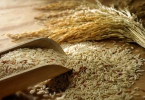 Loại gạo được người dân ưa chuộng nhất Việt Nam