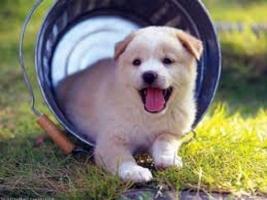 Giống chó tốt nhất để bạn nuôi trong nhà