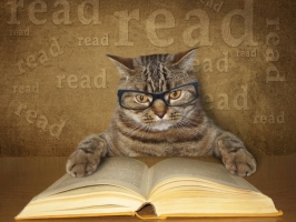 Giống mèo thông minh nhất thế giới