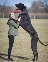 Giống chó nguy hiểm nhất thế giới
