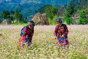 điểm đến thu hút nhiều du khách nước ngoài nhất tại Việt Nam
