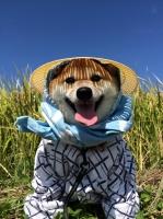 Hình ảnh đáng yêu của anh em nhà cún