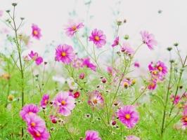 Hình ảnh đẹp nhất về hoa