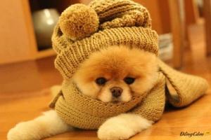 Khoảnh khắc đáng yêu của bé cún khiến bạn không chịu được