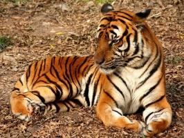 Loài động vật hoang dã sắp bị tuyệt chủng trên thế giới