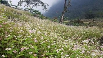 địa điểm ngắm hoa tam giác mạch đẹp nhất tại miền Bắc