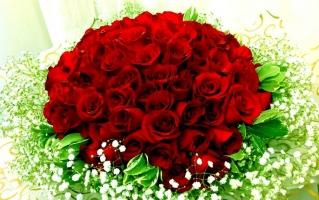 Loài hoa ý nghĩa tặng bạn gái vào ngày Valentine