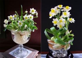 Loại hoa đẹp và ý nghĩa dành cho phòng khách dịp Tết Nguyên đán