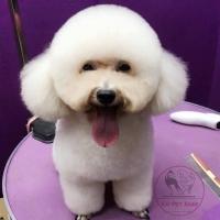 Dịch vụ spa cho thú cưng uy tín nhất ở Hà Nội