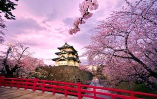 Điều kì lạ nhất có thể bạn chưa biết tại Nhật Bản