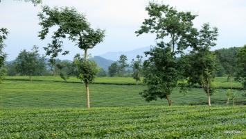 Địa danh nổi tiếng của Phú Thọ