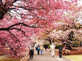 Khu mua sắm hấp dẫn, nổi tiếng nhất  Nhật Bản