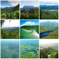Top 10 Khu rừng tự nhiên lớn nhất thế giới