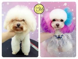 Top 10  Dịch vụ cắt tỉa lông thú cưng đẹp và uy tín nhất Hà Nội