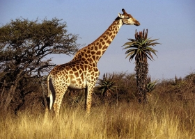 Kỷ lục đặc biệt nhất trong thế giới động vật