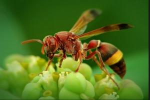 Kỷ lục gia đặc biệt nhất trong thế giới côn trùng
