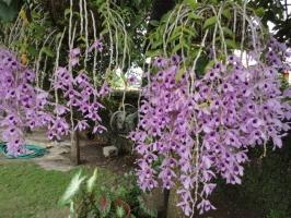 Loài hoa lan đẹp và dễ trồng nhất hiện nay