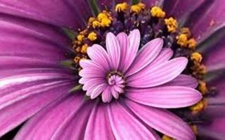 Làng hoa đẹp ngất ngây ở miền Bắc vào dịp Tết