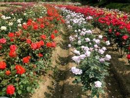 Làng hoa nổi tiếng nhất ở Việt Nam