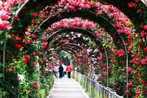 Lễ hội hoa đẹp nhất trên thế giới