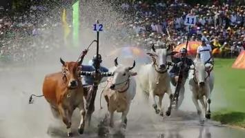 Lễ hội văn hóa truyền thống ở miền Tây Nam Bộ