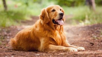 đặc điểm nổi bật nhất của loài chó