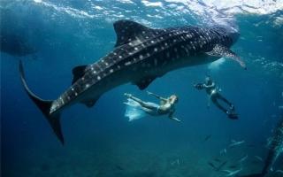 Loài cá dài nhất thế giới