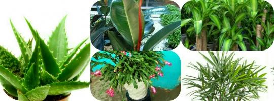 Loại cây cảnh giúp khử độc tốt nhất cho ngôi nhà của bạn