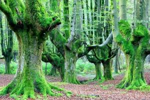 Loài cây độc đáo nhất thế giới có thể bạn muốn biết