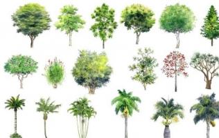 Loài cây độc nhất thế giới