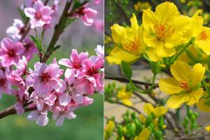Loại cây hoa được người Việt Nam chuộng mua nhất vào dịp Tết Nguyên đán