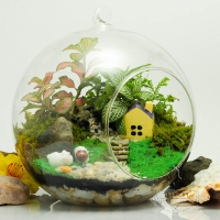 Loại cây cảnh đẹp nên trồng trong nhà